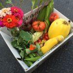 veggie boxes 2